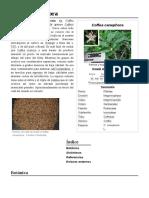 Coffea_canephora.pdf