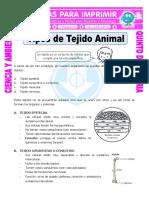 Ficha-Tipos-de-Tejido-Animal-para-Quinto-de-Primaria