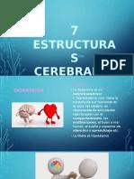 7 FUNCIONES CEREBRALES (1)