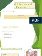 small intestine and pancreas