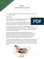 Practica I y II; Sistema digestivo de las aves/Accion de los tendones