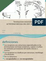 organización general del sistema nervioso y actividad refleja (1)