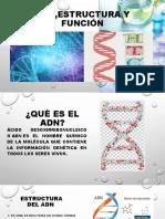 ADN,ESTRUCTURA Y FUNCIÓN.pptx