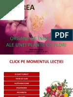 lectie_flori.ppsx