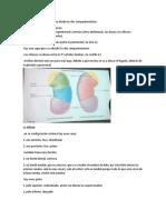 ANATOMIA-RENAL.docx