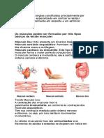 Sistema muscular - Cópia