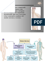 sistema nervioso2019