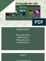 CLASIFICACION DE LOS ANIMALES VERTEBRADOS