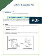 El-Metabolismo-Celular-para-Quinto-de-Secundaria.doc