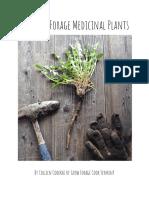 5 Easy to Forage Medicinal Plants Mini eBook.pdf