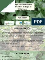 GUIA PLAGAS Y ENFERMEDADES DE PAPA 2018 29-05-2018.pdf