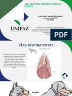 Semiología Sistema Respiratorio Caninos y Felinos feb 21 2020