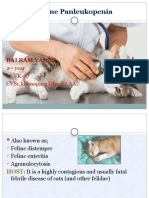Feline Panleukopenia balram yadav