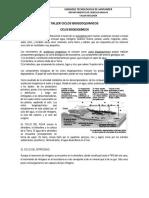 guia-taller-2-ciclos-biogeoquimicos.docx