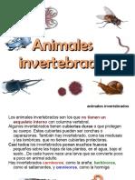 Tema 7. Apuntes Invertebrados