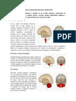 ESPECIALIDAD DE SISTEMA NERVIOSO.pdf