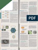 Purificacion, deteccion y caract de proteinas (LODISH).pdf