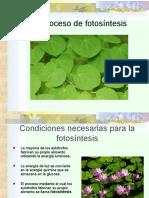 3.4 El proceso de la fotosintesis.ppt