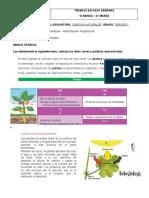 taller+N1+-+ciencias+naturales+-reino+vegetal++tercero (1)