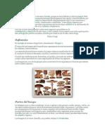 hongos - reino fungi.docx