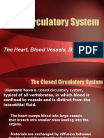 CirculatorySystem .ppt