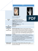 Fase 2_EstudiosRadiologicos_Mano_YerlynFernandaLozano (1).docx