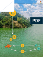 Beyond Toxins A Source‐to‐Treatment Strategy for Harmful Algal Blooms