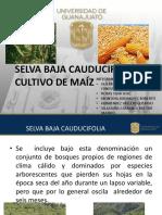 MAIZFINAL.pdf
