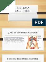 presentación sistema excretor.pptx