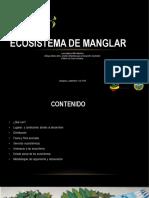 ECOSISTEMA-DE-MANGLAR