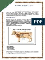 244671904-sistema-circulatorio-de-la-vaca-docx.pdf