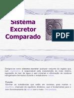 207_362sistema_urinario_comparado.ppt