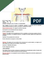 miembro superior anatomia.docx