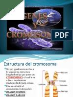 cromosomas.pptx