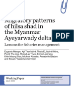 Migratory patterns of hilsa shad in the Myanmar Ayeyarwady delta