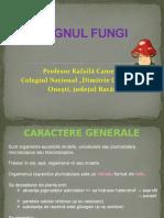 4._regnul_fungi