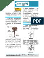 MATERIAL_20131001160119TeoriaRaizCauleFolha.pdf