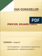 Patologia gonadelor.pdf