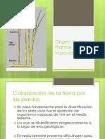 Origen de las plantas vasculares