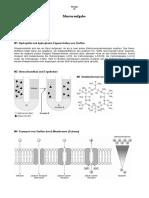 Musterklausur-Biologie-Zellbiologie