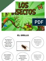 INFORMACIÓN GRILLO.docx