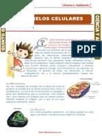 Organelos-Celulares OCTAVO.doc