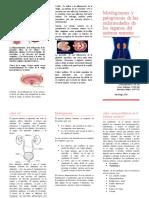 Morfogénesis y patogénesis de las enfermedades de los órganos del sistema urinario