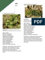 Glosario Ilustrado-convertido.pdf