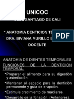 Anatomia dientes temporales