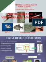 CLASE 1. PROT. y VERT, ANAM.- UNMSM- Hemichordata. 2017-I.pdf