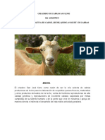 Criadero de Cabras San Jose Emprendimiento 02 (1)