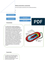Células procariontes y eucariontes repaso 1º medio