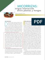 MICORRIZAS_ Antigua interacción entre plantas y hongos.pdf