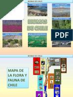 losbiomasdechile-120106174427-phpapp02.pdf